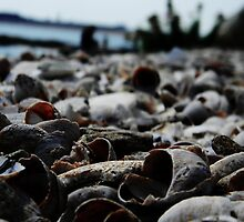 Beach Shells_1 by Kyle LeBlanc