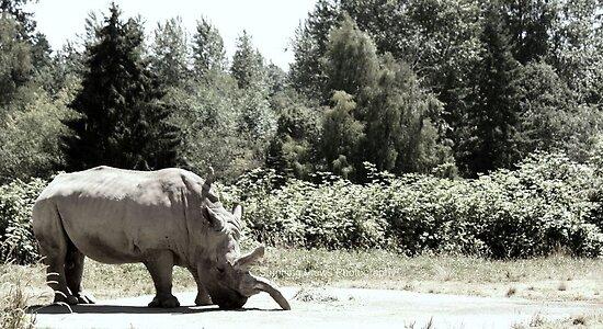 Rhino by Oceanna Solloway