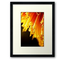 Red Hot Tips.  (red hot pokers, macro) Framed Print
