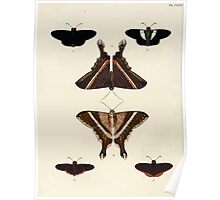 Exotic butterflies of the three parts of the world Pieter Cramer and Caspar Stoll 1782 V3 0032 Poster