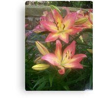 Beautiful lily Canvas Print