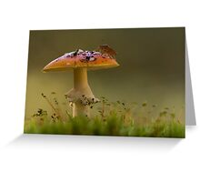 Fly Agaric with Stink Bug Greeting Card