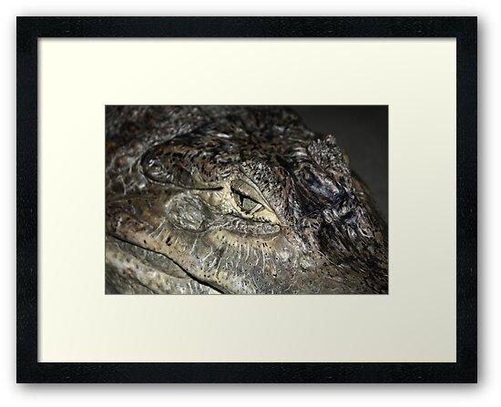 the eye of a croc by Oceanna Solloway
