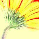 Gerbera HI Contrast by Paul Revans