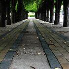 Tree Hallway (Spring) by Kyle LeBlanc