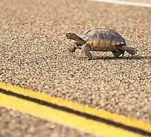 Mojave Desert Tortoise  by Kate Krutzner