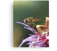 HOVERFLY AND THISTLE Canvas Print