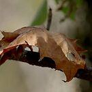 Autumn Leaf by Dave & Trena Puckett