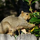 squirrel on the fence by tego53