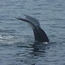 Whale's Tail - Cape Cod by Nina Brandin
