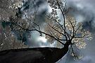 Look Up, Way Up - Dunrobin Ontario by Debbie Pinard