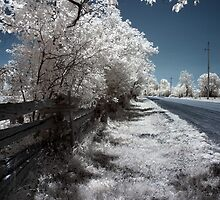 By the Side of the Road - Dunrobin, Ontario by Debbie Pinard