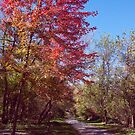 Red Tree on Path by SBrown