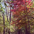Red Tree on Path II by SBrown