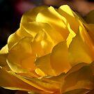 Last Rose of the Season by Brian Bo Mei