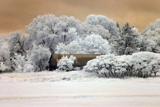 Barn Among the Trees - Carp, Ontario by Debbie Pinard