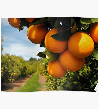 """""""orange""""                      south australia Poster"""