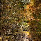 Autumn Splendor by Michael  Petrizzo