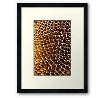 Spent - Sunflower Seed Head Framed Print