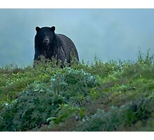 Black Bear in the Woods Photographic Print