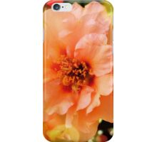 Precious Peach: Blooms in Boothbay Harbor iPhone Case/Skin