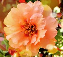 Precious Peach: Blooms in Boothbay Harbor by artistwriter