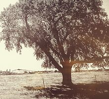 The Old Rock Elm by Shellibean1162