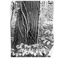 Vines and Bark Poster
