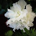 White Azalea by Linda Miller Gesualdo
