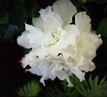 White Azalea by Linda Miller Gesualdo