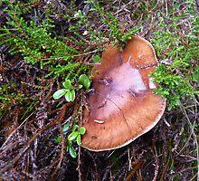 Smiley Fungus by Braedene