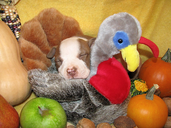 Uno Asleep With The Turkey by Ginny York
