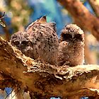 Tawny frogmouth mother with young by trishie