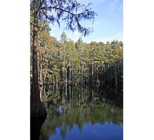 Cypress Tree Reflections Photographic Print
