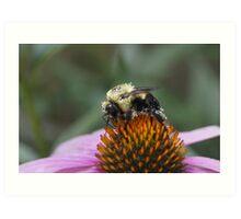 Pretty in Pollen Art Print