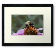Pretty in Pollen Framed Print