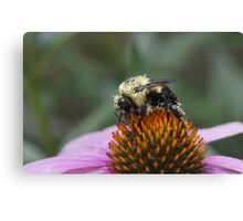 Pretty in Pollen Canvas Print
