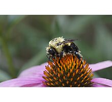 Pretty in Pollen Photographic Print