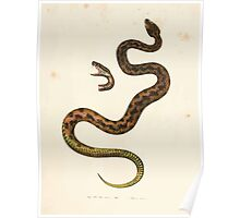 Leopold Joseph Fitzinger 1867 0149 Picture Atlas for popular scientific natural history of vertebrates Poster