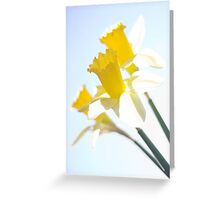 Sunny Daffodils on Blue Sky Greeting Card