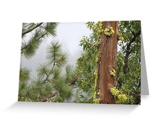 Trees In The Forest Mist Greeting Card