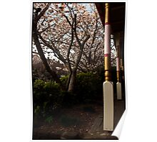 Cherry Blossums in front of the Awning  Poster