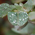 Green leaf after rain by jozi1