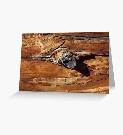 Tree - Rocky Mountain National Park, Colorado Greeting Card