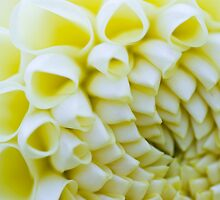 White Flower #2 - Thuya Garden by David Clayton