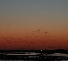 Sandhill Cranes - Kearney, Nebraska by Nina Brandin