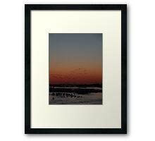 Sandhill Cranes - Kearney, Nebraska Framed Print