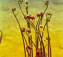 Fiddleheads - Bowman's Hill by David Clayton