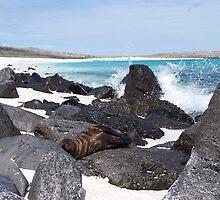 Baby Seal - Galapagos, Equador by Nina Brandin