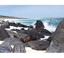 Baby Seal - Galapagos, Equador Photographic Print